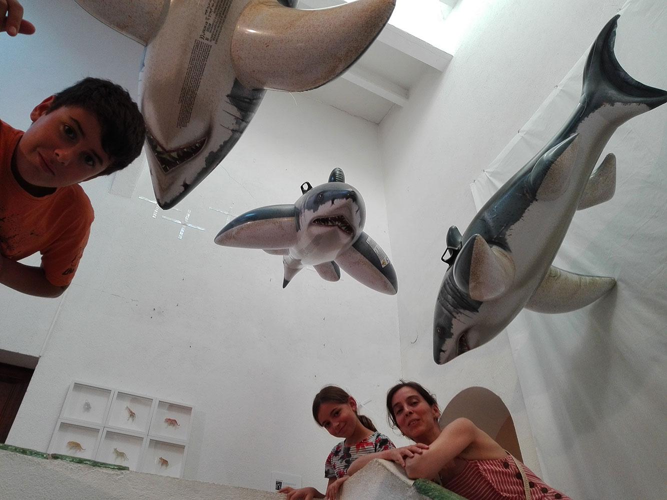 Instal·lació de taurons a Colors & Animals de Josep Maria Compte