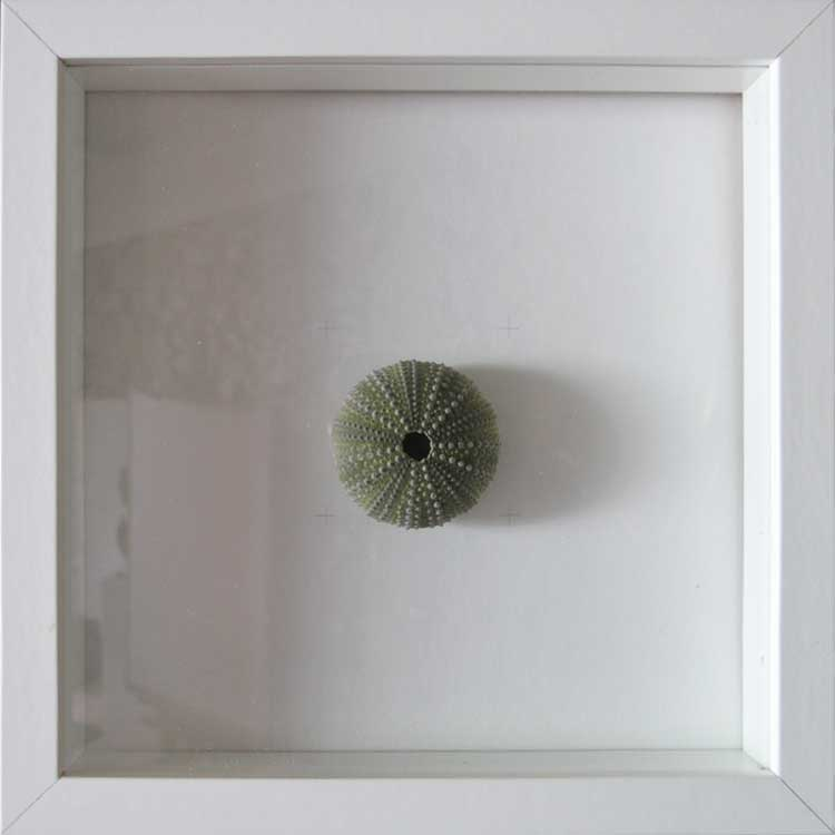 Artpiece: Shapes and Textures 1 - Sea urchin shell